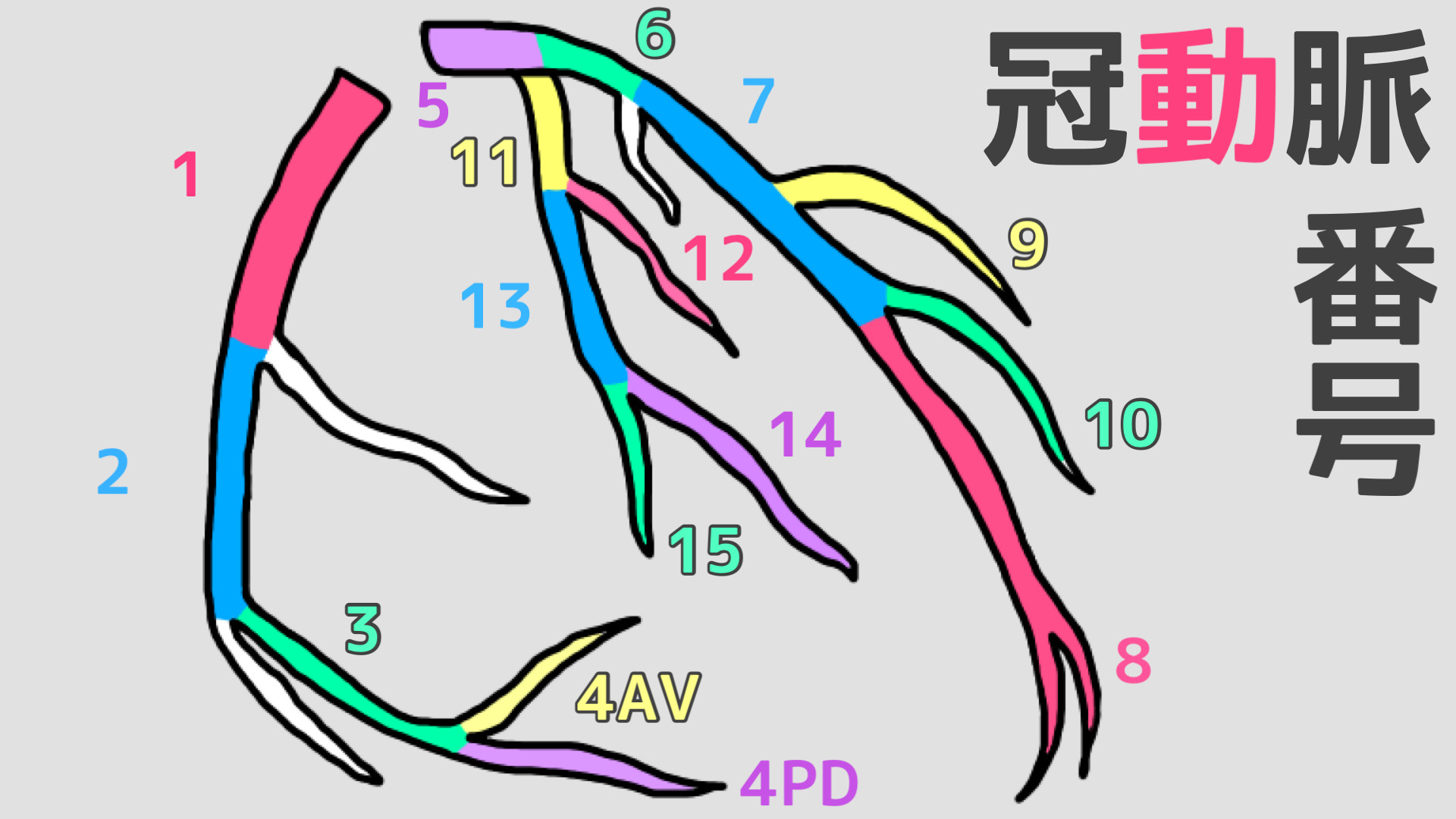 冠動脈の番号
